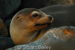 One of my favorite from the Galapagos Islands.  She keeps... by Stuart Bailey