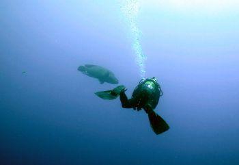 """Sharm: a big napoleon and a """"big"""" diver. Coolpix 5000, Se... by Ugo Gaggeri"""