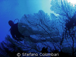 Flying over cnidarians by Stefano Colombari