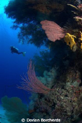 Diver at Albatros Passage by Dorian Borcherds