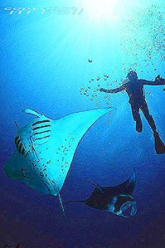 Pacific - Yap - COMPOSING > 2 Mantas - Nik. V - subtronic... by Manfred Bail