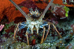 One of many in Little Cayman by Larry Polster