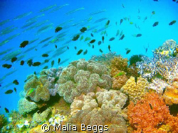 There are so many different colorful corals, that I would... by Malia Beggs