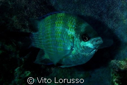 Fishs by Vito Lorusso