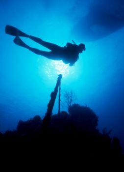 'Wreck on the wall'...Bahamas  by Claudia  Pellarini