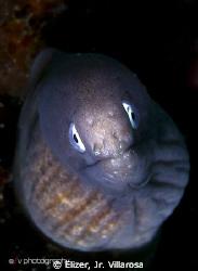 A juvenile moray eel, taken last Jan.6 at Samal Island, D... by Elizer, Jr. Villarosa