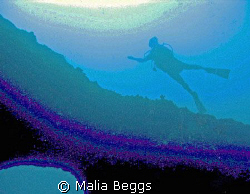 """""""Gliding Through The Spectrums of Color""""  I used my Canon... by Malia Beggs"""