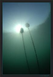 Green waters winter atmosphere. Geneva's Lake by Sven Tramaux