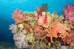 Explosion of colors, D70, Sigma 14mm, White wall, Taveuni... by Larry Polster