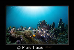 photo taken on housereef of lembeh resort. by Marc Kuiper