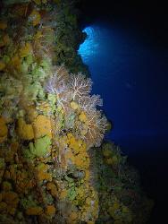 Saipan Grotto by Martin Dalsaso