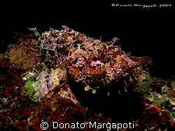Monster, Canon G9, Sea&Sea YS110 by Donato Margapoti
