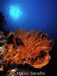 Underwater Similan by Mauro Serafini