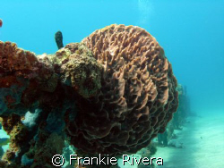 Beautiful Coral formation by Frankie Rivera