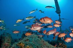 Black bar soldier fish, 80 ft depth. by Juan Torres