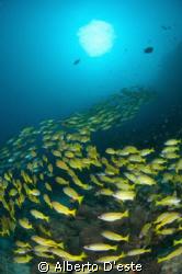 Coral Garden Dive side in Mafia Island. Nikon D70S, 10,5... by Alberto D'este