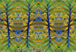 featherstar abstract by Geoff Spiby