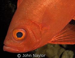 big eye. by John Naylor