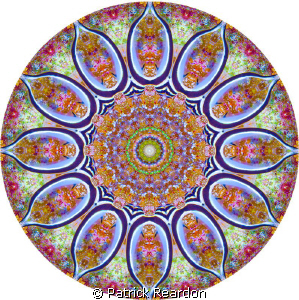 Kaleidoscopic image made from a photo of a juvenile drum ... by Patrick Reardon