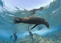 Sealions. Galapagos. D200, 10.5mm. by Derek Haslam