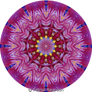 Kaleidoscopic image created from a photo of a featherdust... by Patrick Reardon