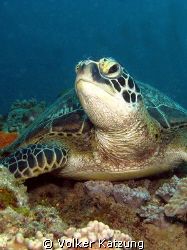 close up of a turtle by Volker Katzung