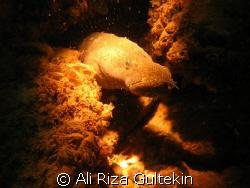I shot this picture from the karakaya lake. It is a kind ... by Ali Riza Gultekin