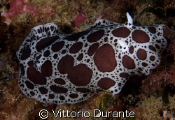 A nudi that looks like a cow by Vittorio Durante