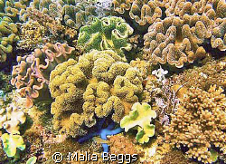 """Blue Seastar Amongst Bohol Coral Garden"".  I have never ... by Malia Beggs"