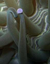 """""""The Kiss"""" close up of the coral. Casio Exilim by Andrew Macleod"""