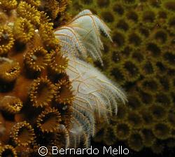 Interesting animal!!! by Bernardo Mello