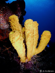 This photo was taken in Cozumel in October 2008. The reef... by Steven Anderson