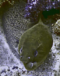"""Twisted Outlook"".  I am not sure if this Green Moray Eel... by Malia Beggs"