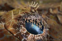 Eye of a Crocodilefish (Cymbacephalus beauforti). I like ... by Michael Henke