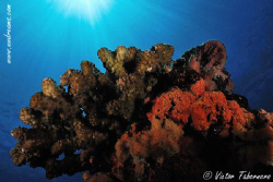 Just coral with sunburst...but what a peaceful place!! by Victor Tabernero