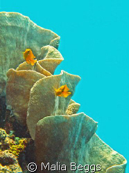 Ambient light shines down on coral & fish.  Canon A650IS,... by Malia Beggs
