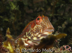 This Blenio was not really aware of a spy with a camera, ... by Bernardo Mello