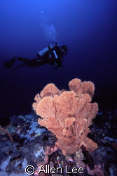Sea Fan & diver.Green Island,Taiwan.Nikon F-100,18-35mm,f... by Allen Lee
