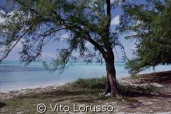Bahamas - Isla Eluthera by Vito Lorusso
