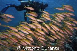 At Jackson Reef by Vittorio Durante