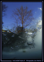 End of today's dive... Water, Ice and a Tree... The water... by Michel Lonfat