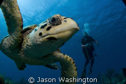 Another curious turtle.. by Jason Washington