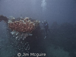 The Loi wreck with blue sponges growing from the bow make... by Jim Mcguire