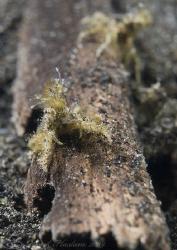 Tiny crab. Lembeh straits. D200, 60mm. by Derek Haslam