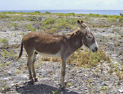 One of the residents of Bonaire. And no, this is not a se... by Jim Chambers