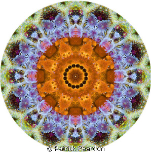 Kaliedoscopic image created using Photoshop made from an ... by Patrick Reardon