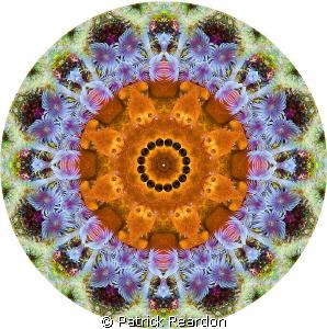Kaliedoscopic image created using Photoshop made from an ... by Patrick Reardon