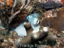 Octopus Eyes @ Culebra Island, Puerto Rico by Frankie Rivera