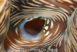 Seaclam up close by Louwrens De Lange