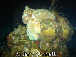 Nite dive in Paradise, reef that is. by Jerry Stinnett